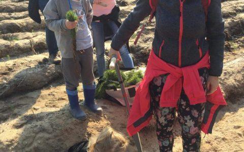 Krasnale i Rybki biorą udział w akcji sadzenia lasu